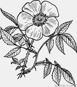 dibujo de una planta y sus partes