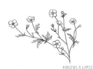 dibujos de flores para dibujar