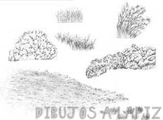 dibujos de hierbas arbustos y arboles