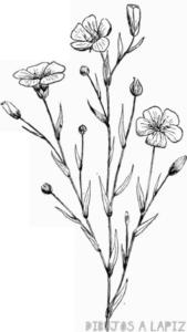 dibujos de plantas para colorear