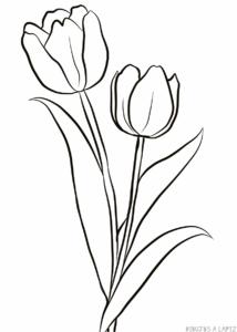 dibujos de tulipanes para colorear