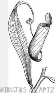 foto planta carnivora