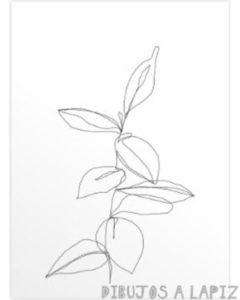 fotos de plantas medicinales