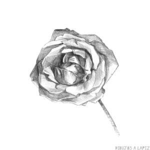 fotos de ramos de rosas