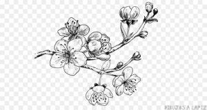 imagenes cerezos en flor
