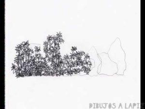 imagenes de arbustos con sus nombres