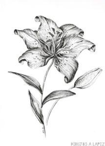 imagenes de flores lirios