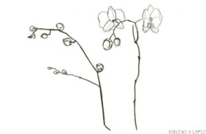 imagenes de orquideas para dibujar