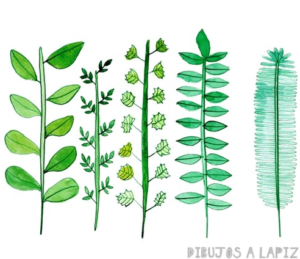 imajenes de plantas