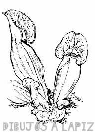 informacion sobre plantas carnivoras para niños