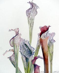 partes de la planta carnivora