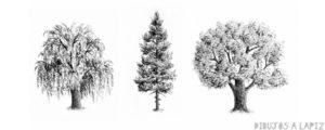 pino de navidad para colorear e imprimir