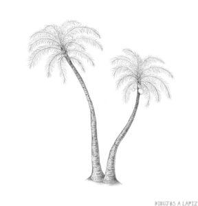 pinturas de playas con palmeras