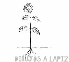 plantas para imprimir