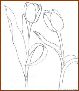 tulipanes colores